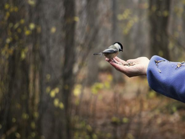 seeing-bird-at-morning-thinatamil