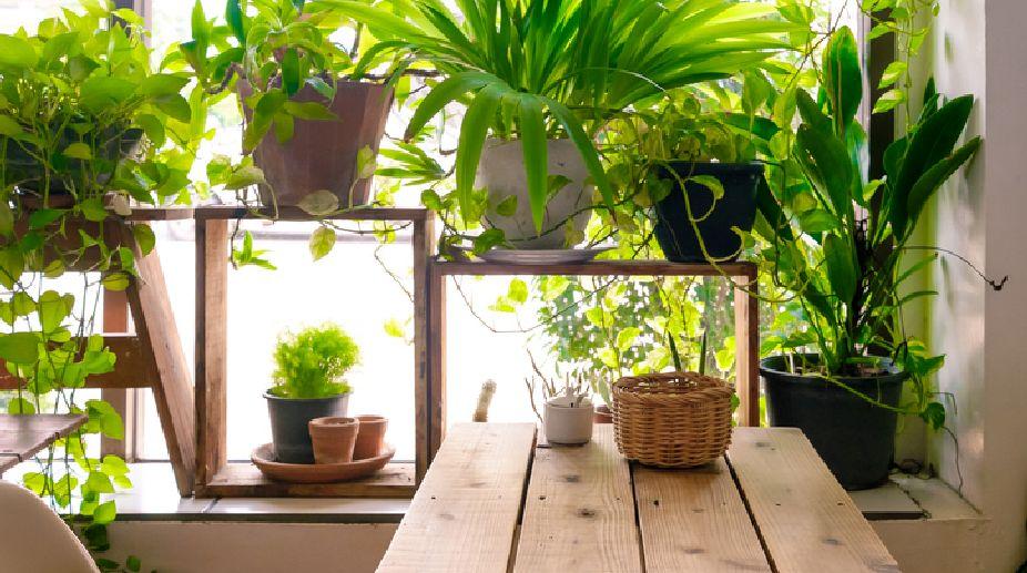 green-plants-thinatamil.jpg