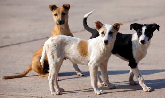dogs-love-thinatamil.jpg